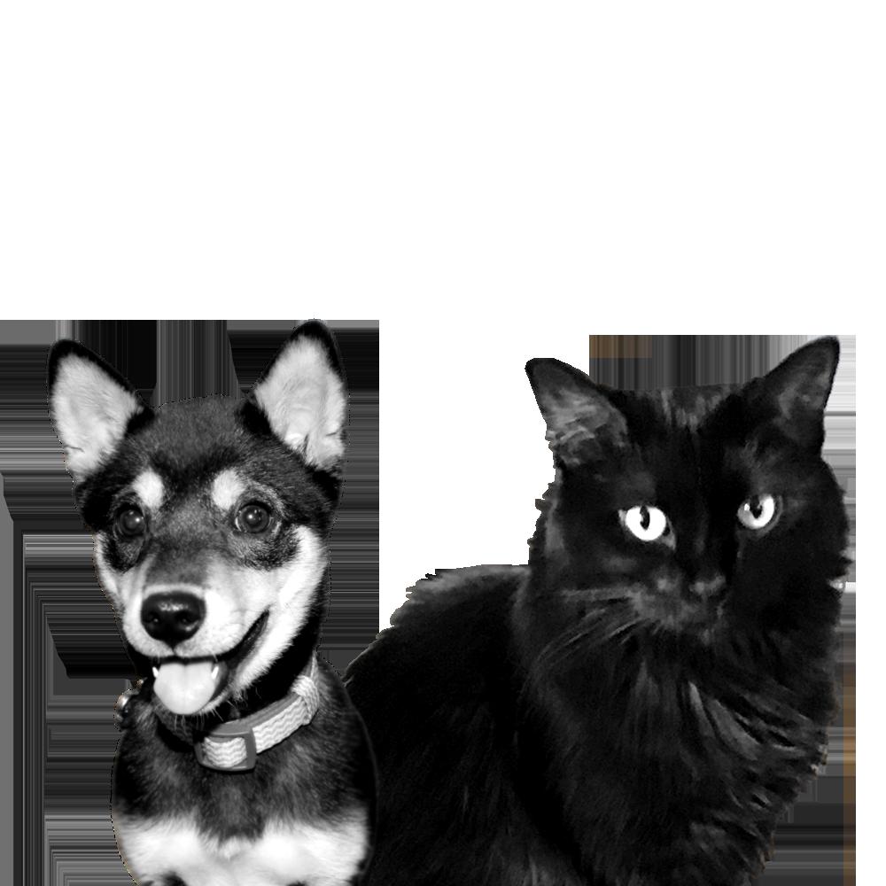Pets of Zeon